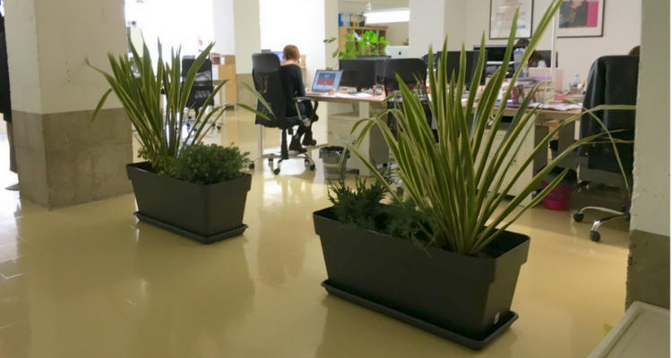 beneficios-de-tener-plantas-en-oficina